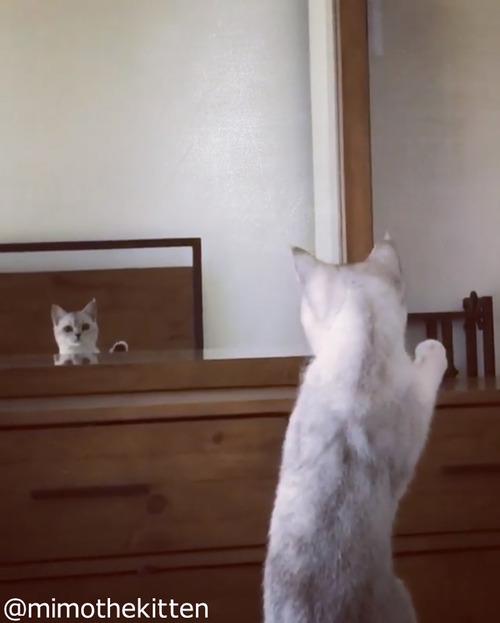 """自分の""""耳""""の存在に初めて気づいた猫04"""