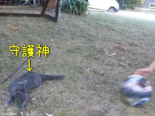 世界最高のゴールキーパー猫00