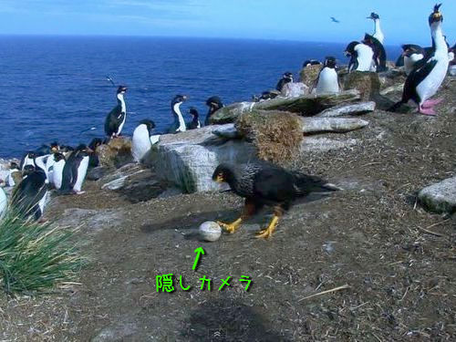 卵カメラと鳥 02