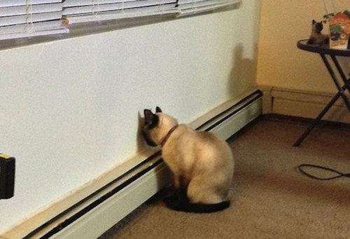 ペットが壁に頭を向けてる時に疑うべき病気06