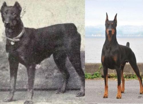 犬種は100年でこう変わった00