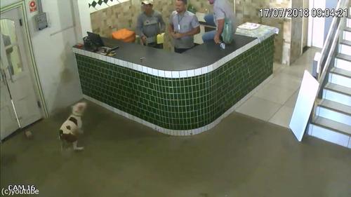 ブラジルの労働者たちが動物から逃げ惑う02