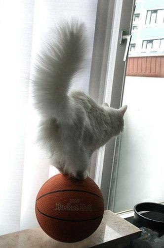 バランス猫02