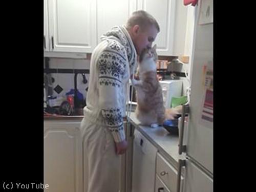 飼い主さんにべったり猫05