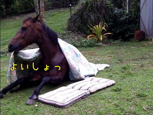 布団で寝る馬00