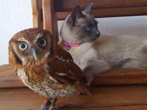 フクロウと猫01