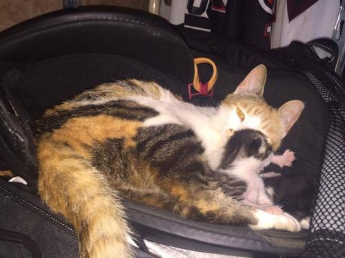 ホッケーのバッグで猫が子育て03
