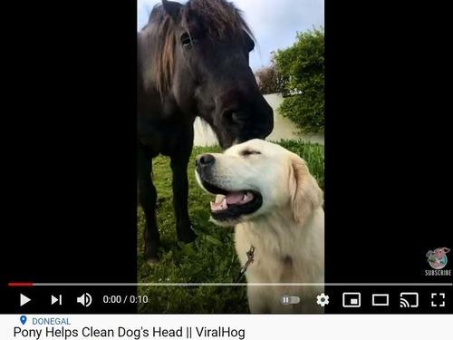馬が犬の頭をなでなで…気持ち良さそう!