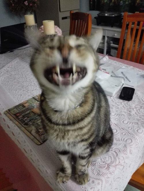 くしゃみ直前の猫09