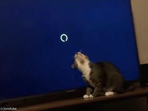 ロード画面が気になる猫00