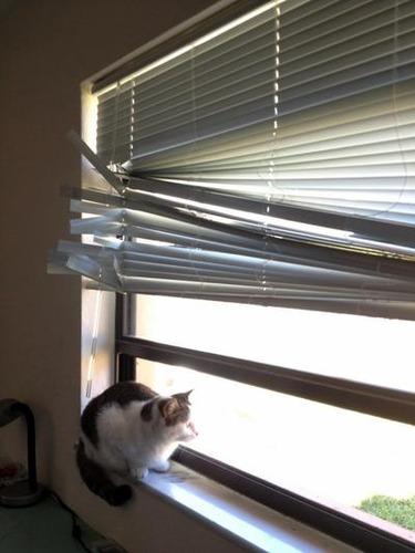 うちの猫が鳥を見るとき02