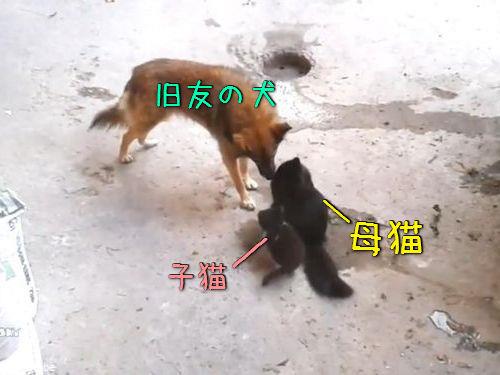 母猫が旧友の犬に会いにやって来た…子猫を連れて00