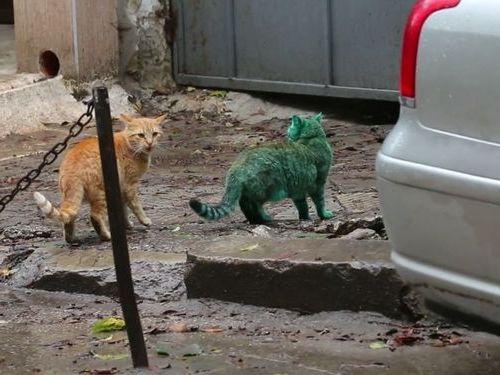 エメラルドグリーン色の猫04