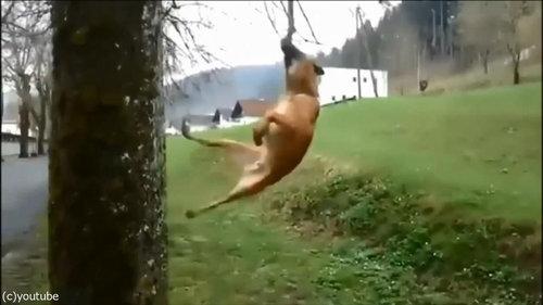 犬のダイナミックなひとり遊び06