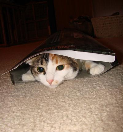 猫ホイホイ01