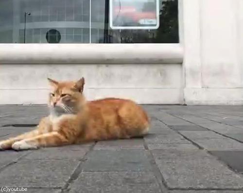 イスタンブールの猫05