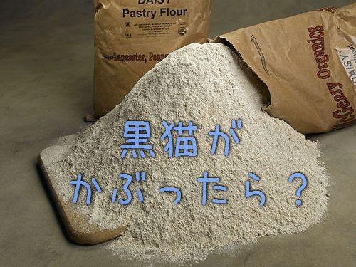 小麦粉をかぶった黒猫00