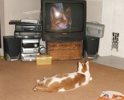 猫の番組を見つめる猫05