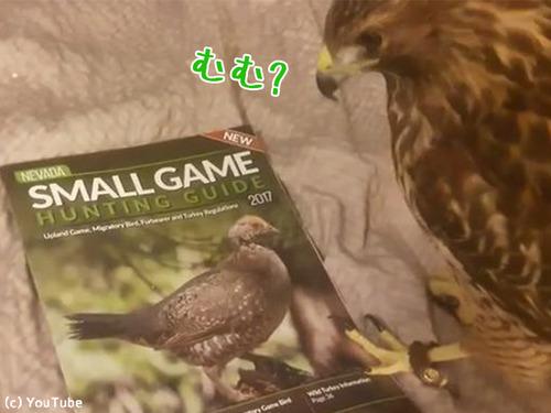 ペットに雑誌をあたえてみた00