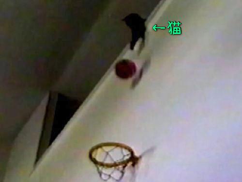 バスケが得意な猫00