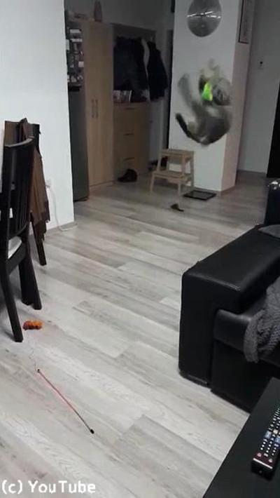 キャッチボール上手な猫03