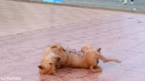 この犬、人間と一緒に踊ってる…01
