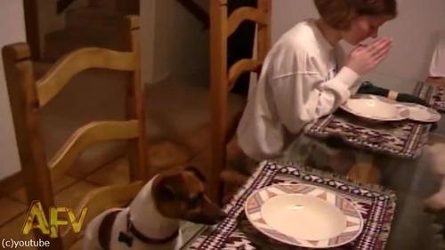 家族の「お祈り」を見て愛犬は…02
