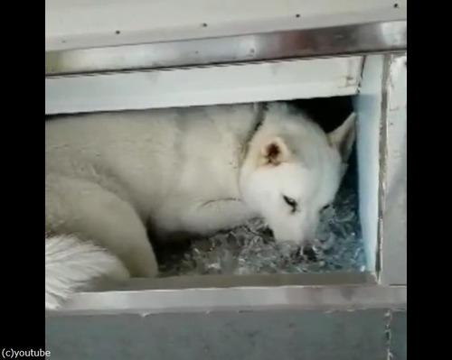 冷凍庫から何か出てる03