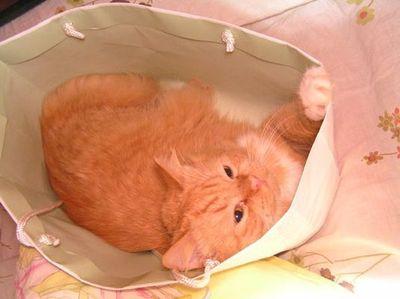 狭い所に入りたがる猫14