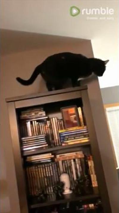 同居猫のジャンプに全力で驚く猫03