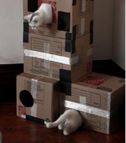 現実をくつがえしている猫08