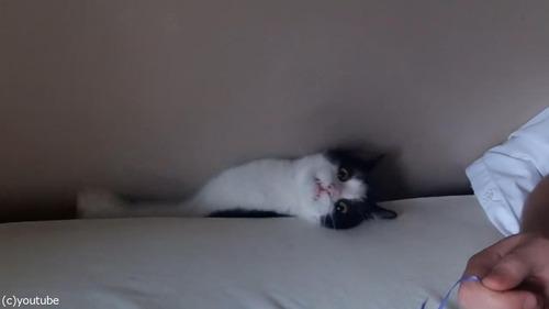 猫がベッドの隙間に吸い込まれる04