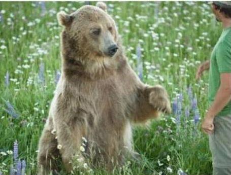 クマを育てた男13