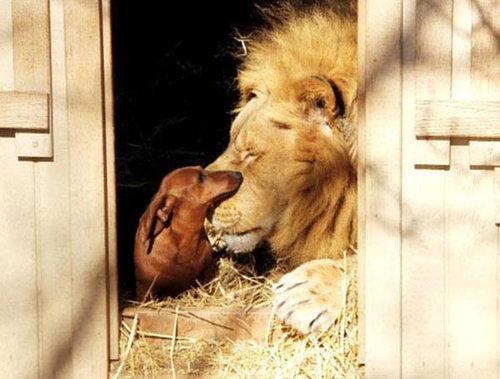 仲良しな動物たち14