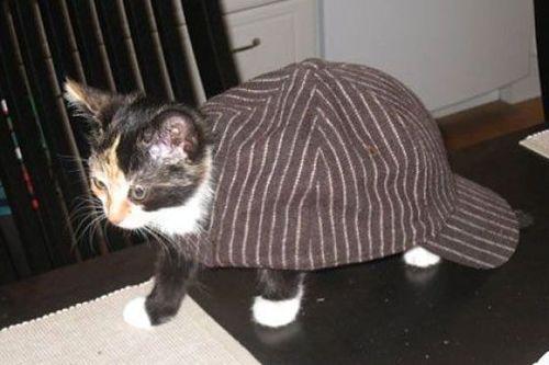 前世は別の動物だったであろう猫03