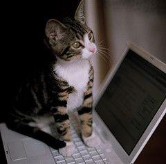 パソコンの上の猫08