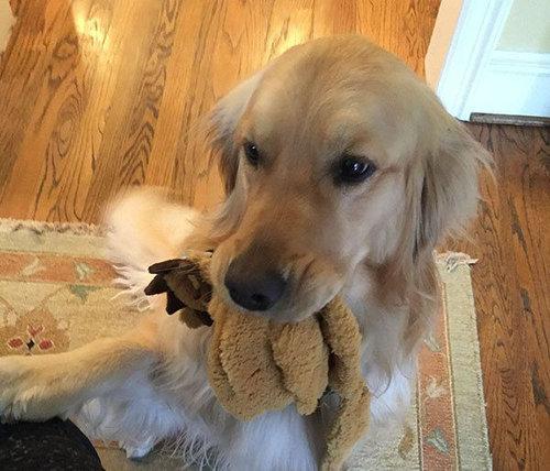 犬を飼うべき理由12