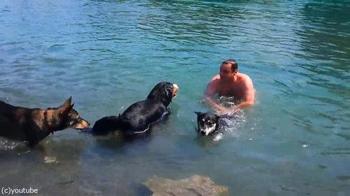 豪快に泳ぎを教えてくれる犬06