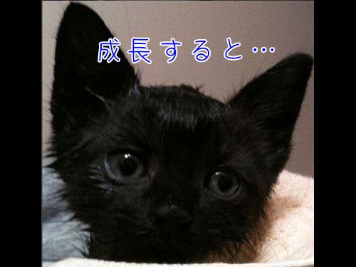 吸血鬼みたいな黒猫00