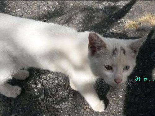 かわいそうな子猫を見つけた00
