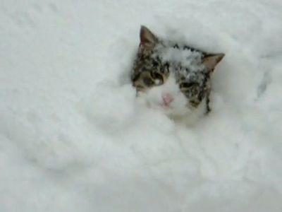 雪が大好きな猫