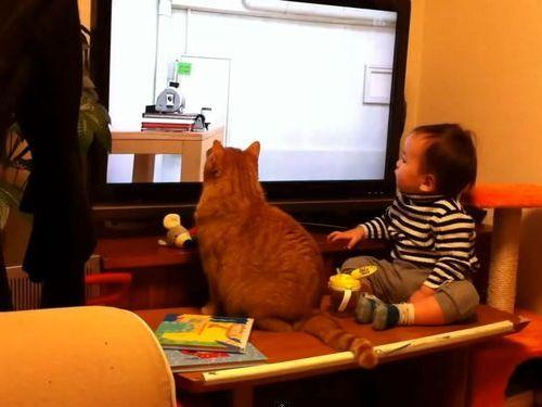 ピタゴラスイッチに夢中な猫と赤ちゃん01