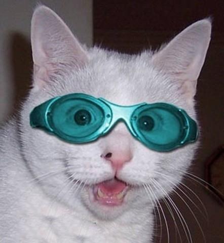 メガネ猫05