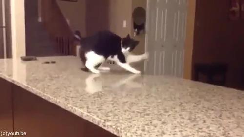 「この猫に…何が起きてるの!」02
