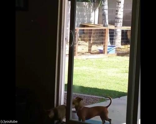 どうにか家に入りたい犬04