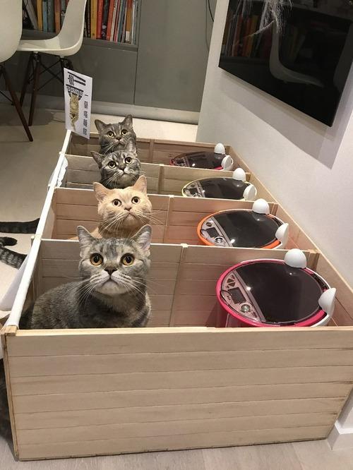 他の猫のエサを食べるデブ猫対策05
