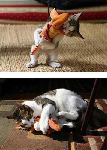 成長した猫16