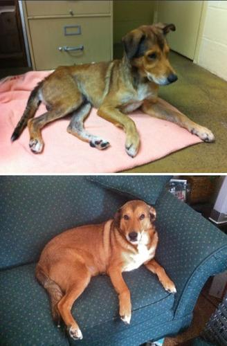 救助された犬や猫16