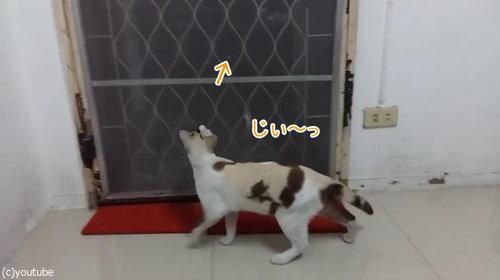 ドアから脱出する猫01