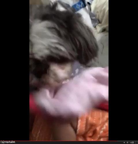 赤ちゃんにブランケットを掛けてあげる犬06